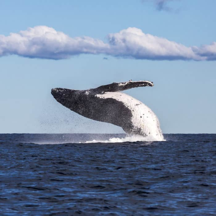 The top spots for whale-watching across Australia